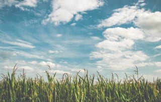 blue sky with white clouds and green grass