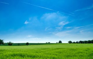 beautiful blue sky over bright green grass with trees in the background